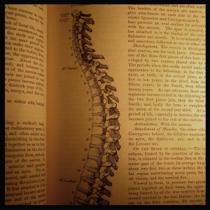 Old-fashioned anatomy textbook for massage and bodywork