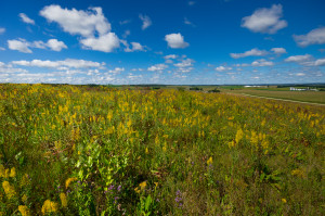 A prairie in Wisconsin